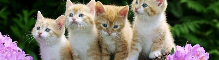 cats-beautiful-cats-free